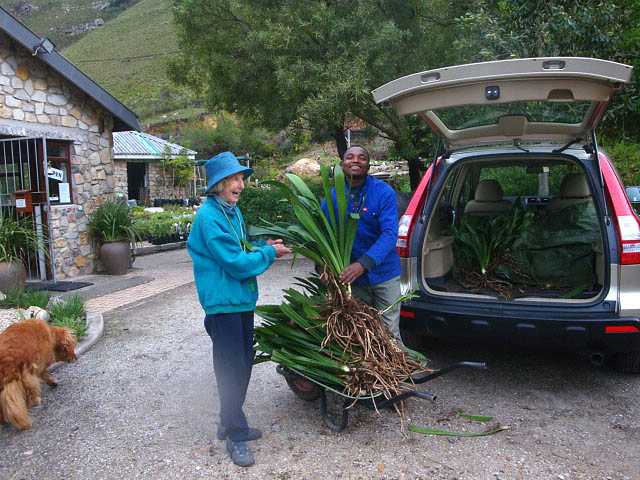 Geraldine and Patric receiving 75 Clivias, recently donated by Dalene and Dave Worrall