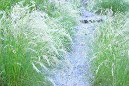 Grasses on the paths