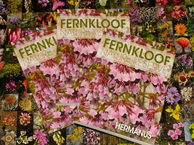 The book and the wrapping paper depicting all the flowers shown in the book