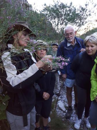 Showing Indigofera filifolia