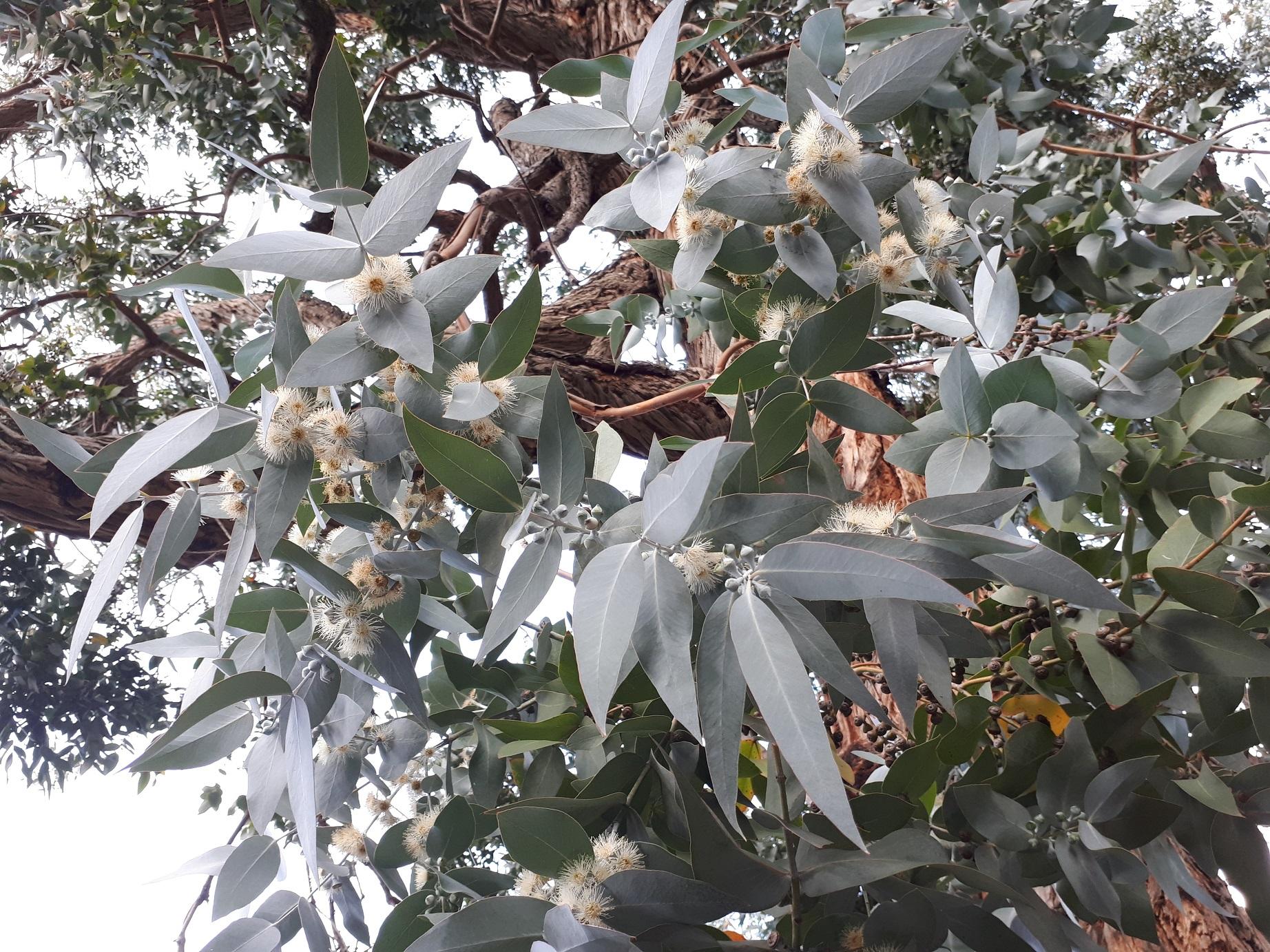 Mossel River Arboretum 23rd May 2018