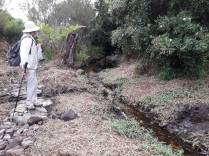 mossel river 3